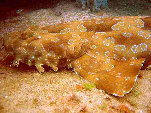 Wobbegon